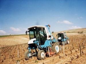 vigne-agriculture-biologique.jpg