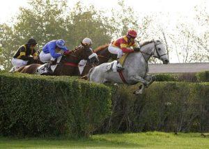 saut cheval.jpg