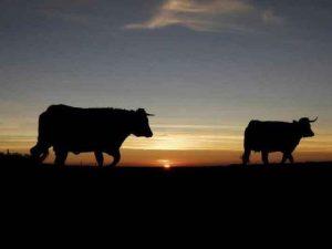Carre-Bio élevage en plein air.jpg