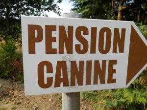 pension canine.jpg