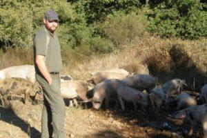 élèvage porcs en plein air.jpg