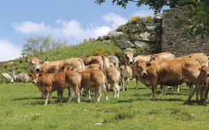 bovins ovins viande lait.jpg