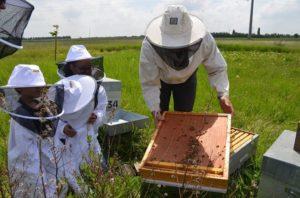 ruche abeille à la ferme.jpg