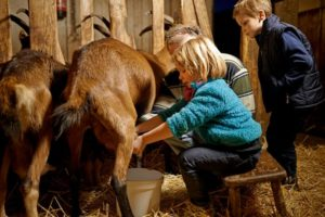 savoir-faire fermier ludique pédagogique.jpg