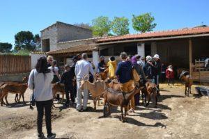 troupeau chèvre à la ferme.jpg