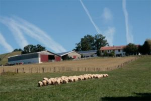 vente à la ferme mouton.jpg